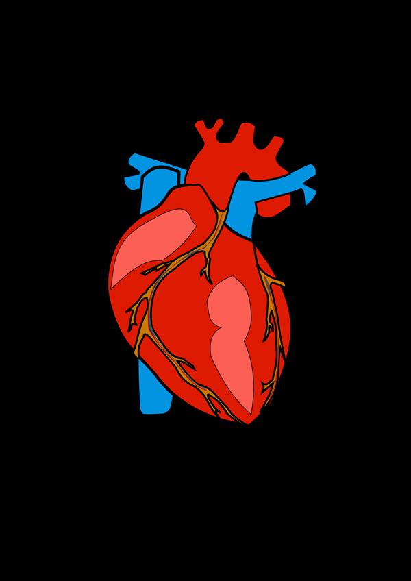 Smith, Ramona / CP Anatomy